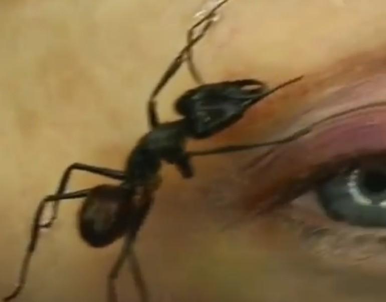 НОВ ТРЕНД: Шминка од мртви инсекти! Дали би пробале? (ВИДЕО)