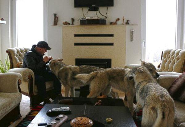 ФОТО: Семејство од Тетово како миленици чува волци!