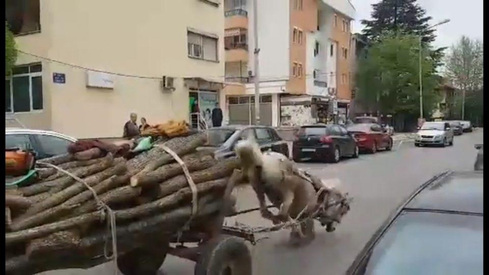 Катастрофални слики од Струмица : Се малтретираат животни за да се превезат украдени дрвја!