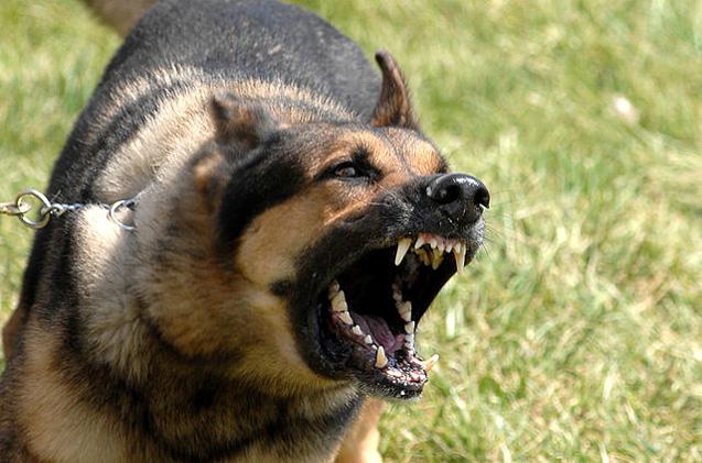 Маж од Радовиш нападнат од куче скитник