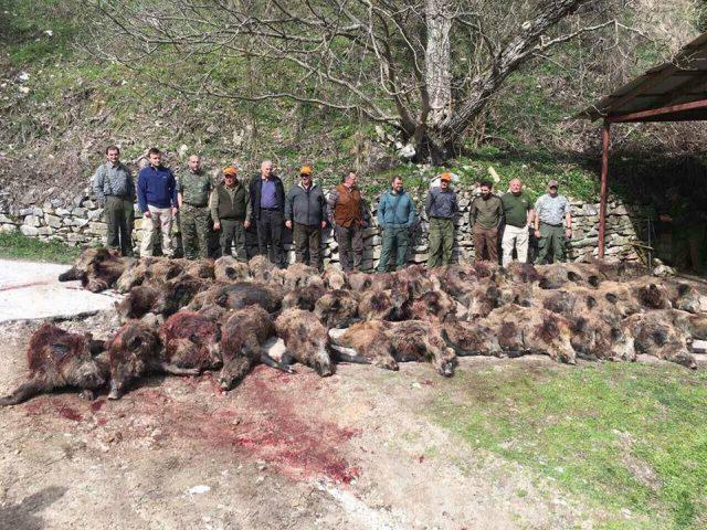 """ВМРО ДПМНЕ: ОЈО да го истражи ловењето на диви свињи во ,,Јасен"""""""