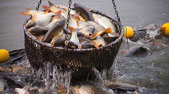 Забрана за риболов во периодот на природен мрест на рибите