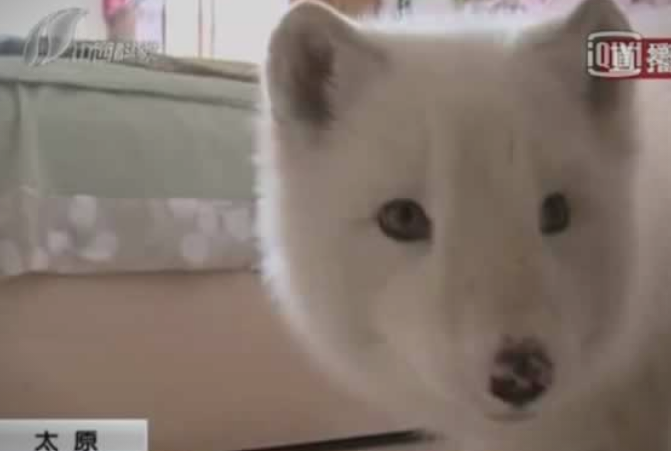 Куче за 9.000 денари: Кога животното почнало да расте сфатила што чува дома (ФОТО)