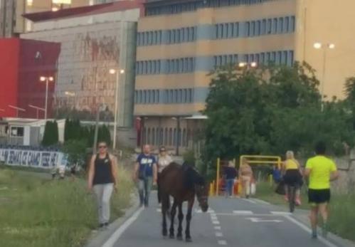 Тажно: Болен и немоќен коњ оставен да умре на кеј (ФОТО)