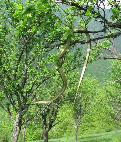 """Џиновска змија ги преплаши планинарите – ја нарекоа """"ужичка анаконда"""" (ФОТО)"""