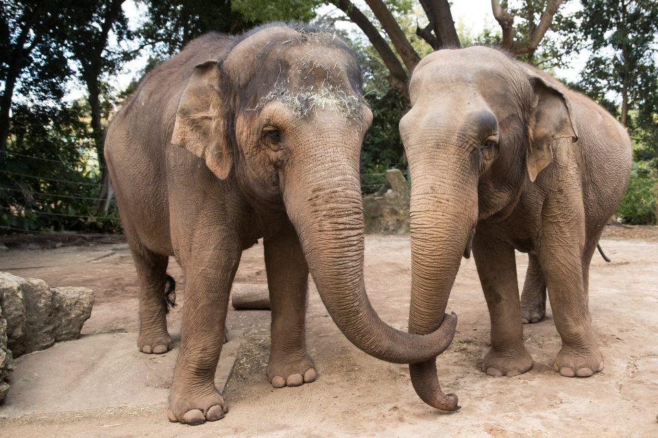 Нови слонови во скопската зоолошка градина во Август
