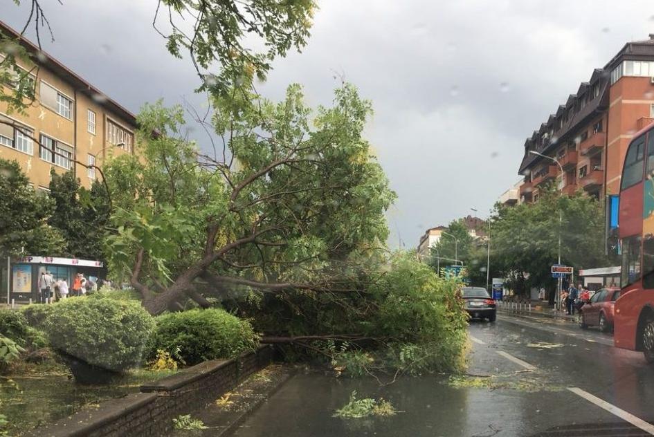 Скопје во хаос: Пријавени триесетина паднати дрвја и бандери