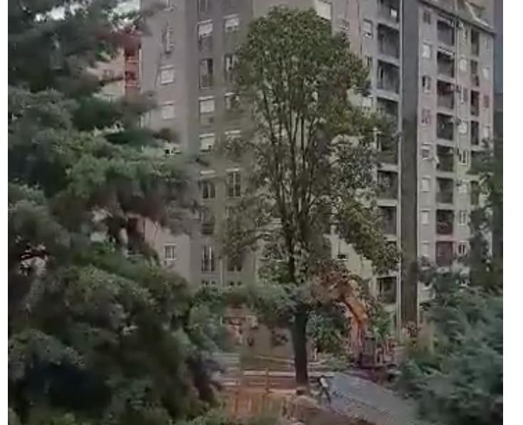 (ВИДЕО) Во Аеродром продолжува сечењето на дрвја