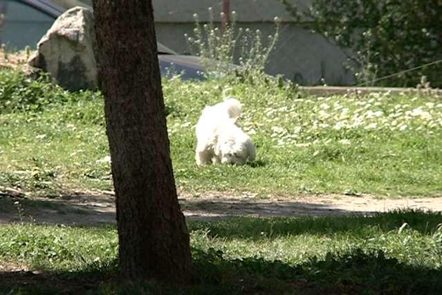 Опасен отров за кучиња поставен во Ѓорче Петров