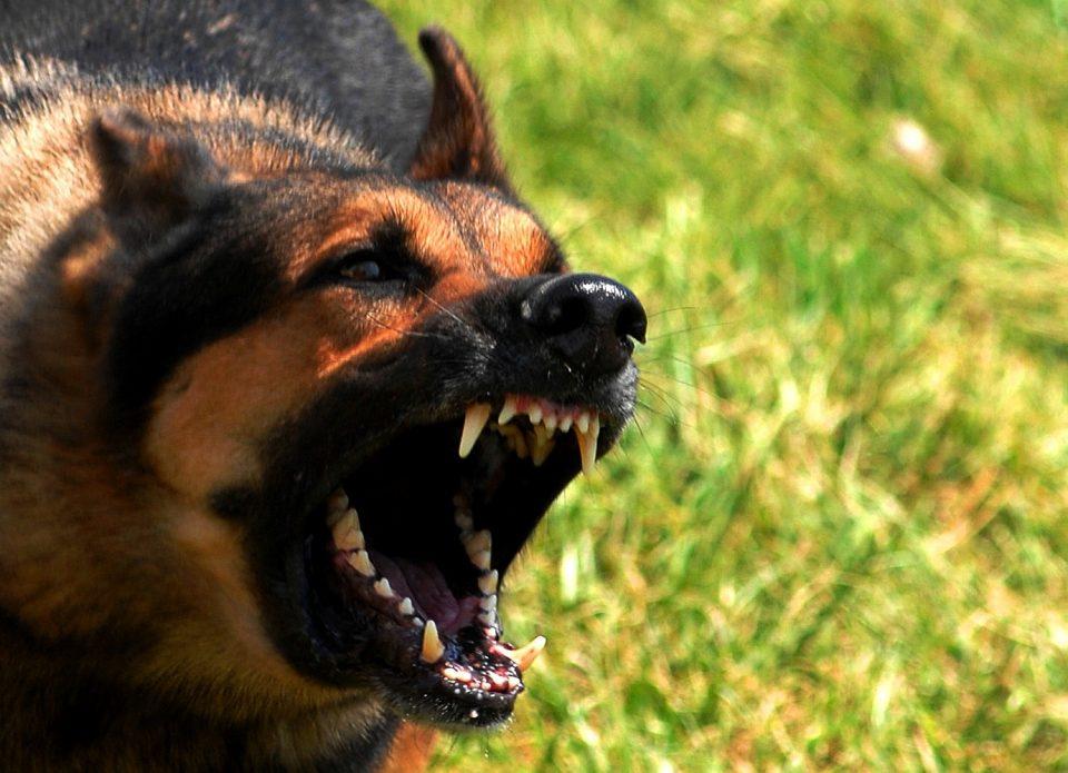 Неколку лица нападнати од кучиња во центарот на Скопје
