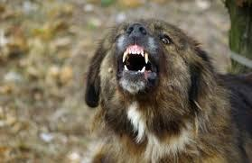 Скопјанка нападната од куче скитник