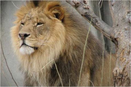 Зоолошката во Брисел е евакуирана