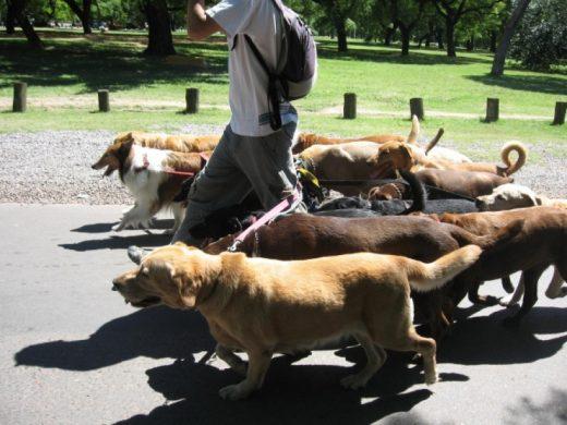 За 100 денари и миленичето и сопственикот задоволни – скопски шетачи на кучиња