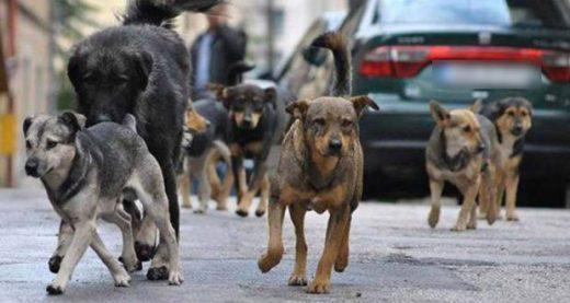 Во Центар и Марино две лица пријавиле дека биле нападнати од кучиња скитници