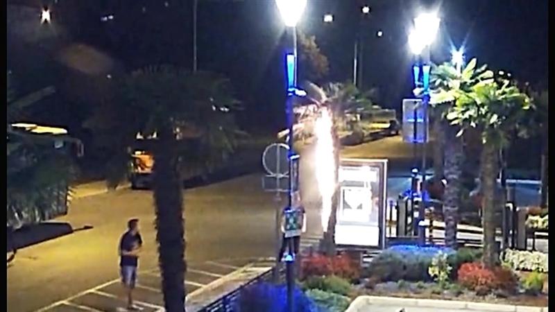 """(Видео) Маскирани млади луѓе ги палат палмите пред клиниката ,,Жан Митрев"""""""