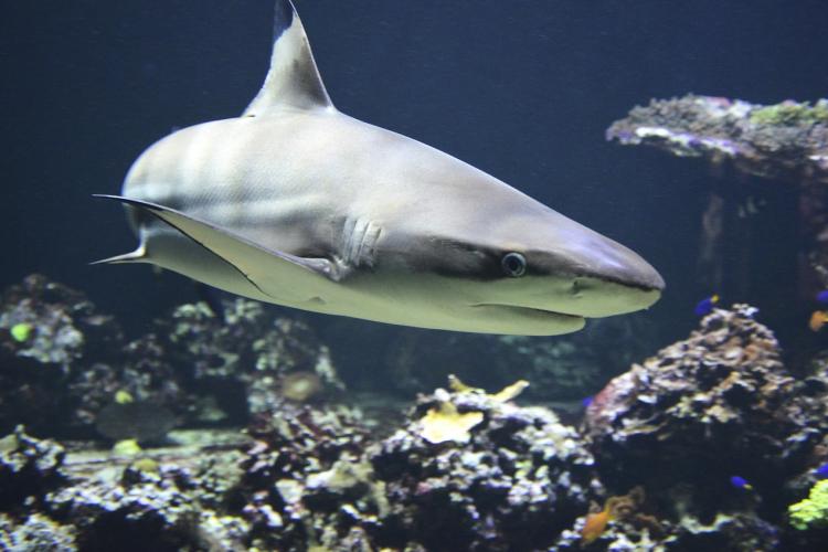 Туристи внимавајте: Нови опасни морски животни се појавија во Јадранското море