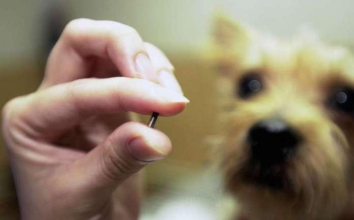 Наскоро почнува вградувањето микрочипови кај домашните миленичиња