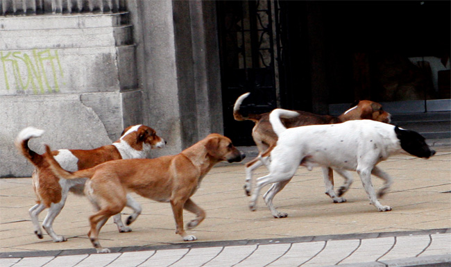 Три лица во Скопје, нападнати и повредени од кучиња скитници