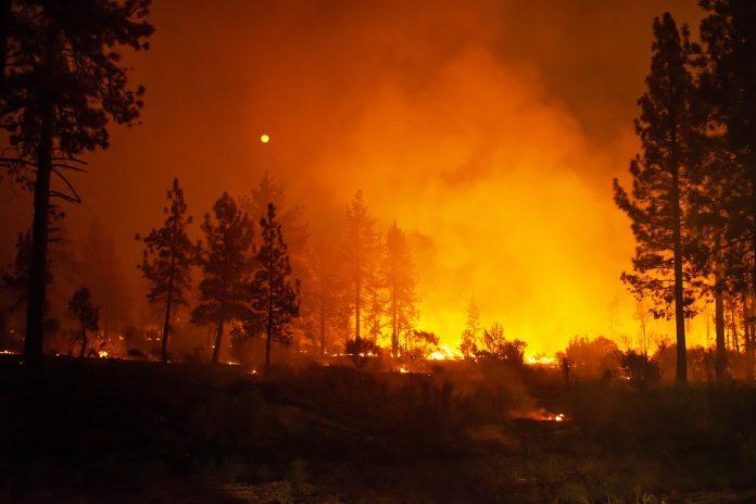 Пожарот на грчкиот остров Евија е ставен под контрола