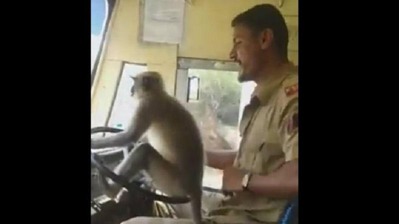 (Видео) Мајмун вози автобус полн со патници во Индија