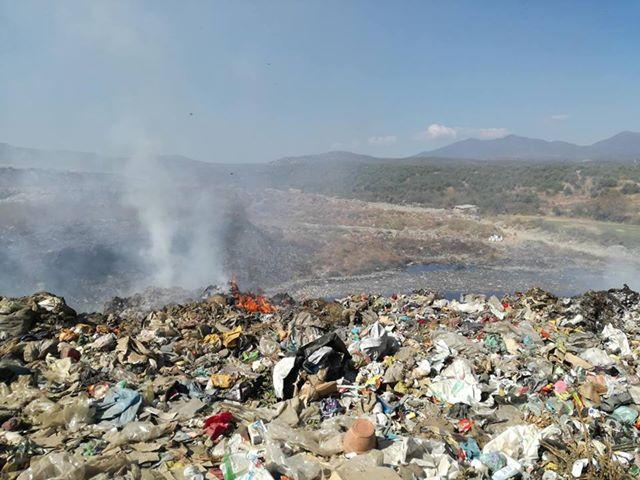 Свињи од депонијата во Струмица се продаваат во месарите – граѓаните реагираат