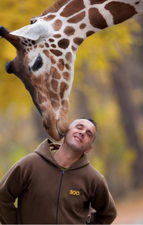 ФОТО: Жирафите и нивниот негувател од скопската зоолошка станаа хит во светот