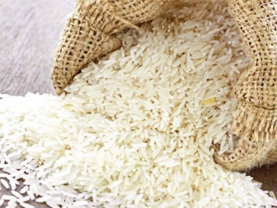Институтот за ориз во Кочани 20 години функционира без кадар и без финансии