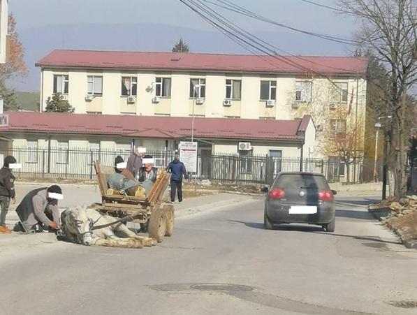 Струмица: Коњ не можел да се крене откако паднал пред полициска станица