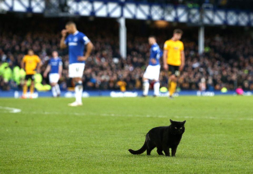 (ВИДЕО) Мачка го прекина фудбалскиот меч во Ливерпул