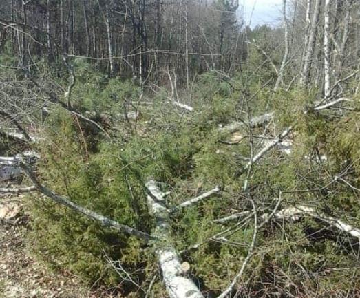 """""""Го сакам Водно"""": Рестартирање на градбата и сеча на шумата на Водно, се случи!"""