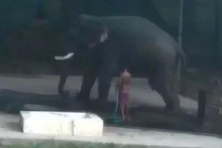 (ВИДЕО) Чувар загина откако слон легна над него