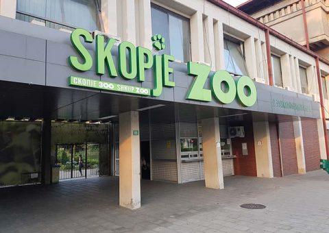 Провалиле во скопската Зоолошка градина, но налетале на лавот Чака – кога ги апселе уште се треселе