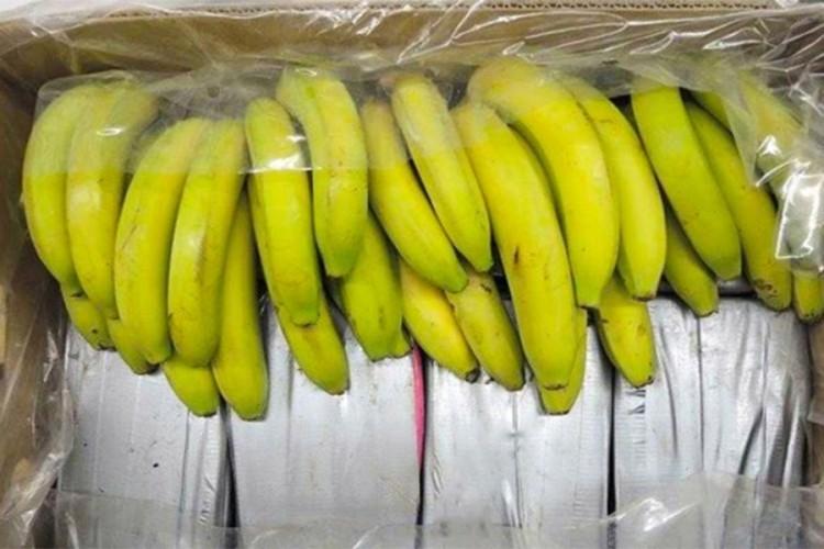 Запленети околу 500 килограми кокаин скриен во банани