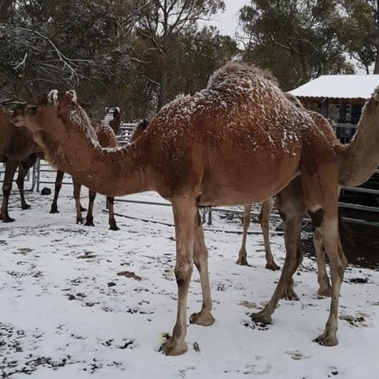 (ФОТО) За прв пат по неколку години – снег падна во Австралија