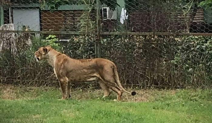 Од Берлин не добивме датум, но за утеха ни подарија лав