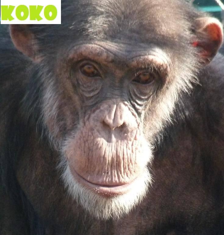 Дојде живот за Коко: Се врати во скопската Зоолошката градина – веќе не е депресивен
