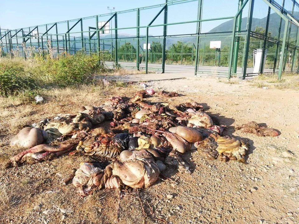 Еколошка катастрофа во Калишта: Депонија од заклани животни