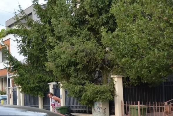 (ФОТО) Катица седи дома во нејзината куќа во Скопје