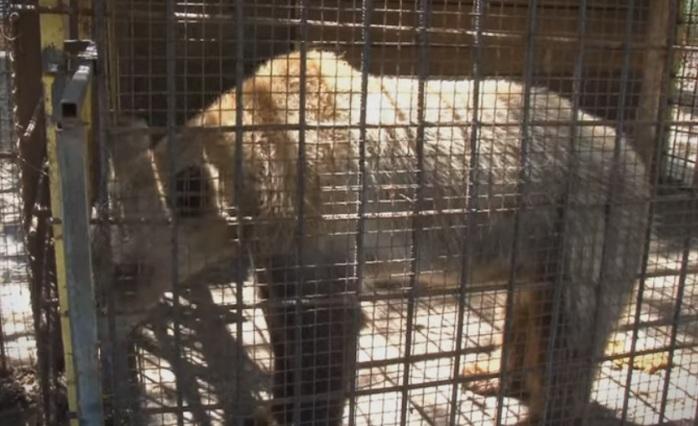 (ВИДЕО) Тажна слика: Во несоодветни услови Зоолошката градина во Штип чува мече