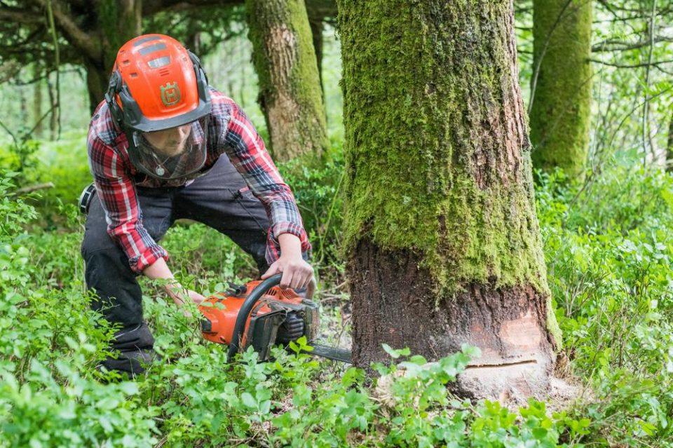 Бизарна несреќа во Хрватска: Сечел дрво со моторна пила и случајно ги убил брат му