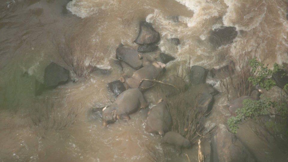 """(ВИДЕО) Нов биланс: Во """"Клисурата на смртта"""" на Тајланд паднале 11 слонови"""