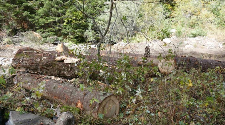 """Се уништува шумата за да се градат нови објекти на Шара, обвинуваат од иницијатива """"Да ја спасиме Попова Шапка"""""""