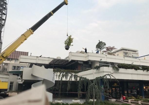 Никнаа првите дрвја на кровот на ГТЦ