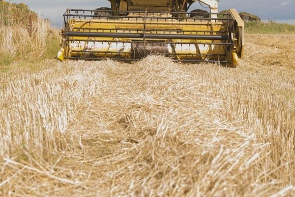 Бабовски: Исплатени близу 17,4 милиони денари за субвенци за откупена пченица од домашно производство