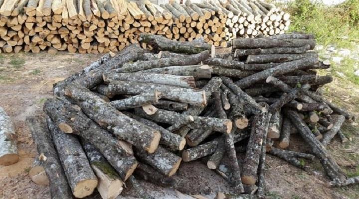 Кривична против шумар кој замижувал пред бесправна сеча