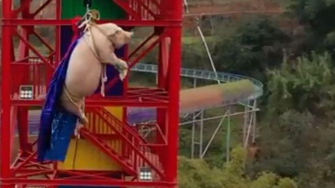 Кинеско лудило во адреналински парк: Присилија свиња на банџи-скокање
