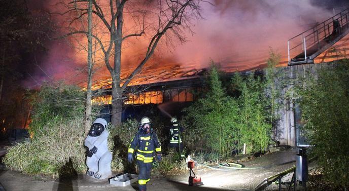 """""""Нема преживеани животни"""" по пожар во германска зоолошка градина"""