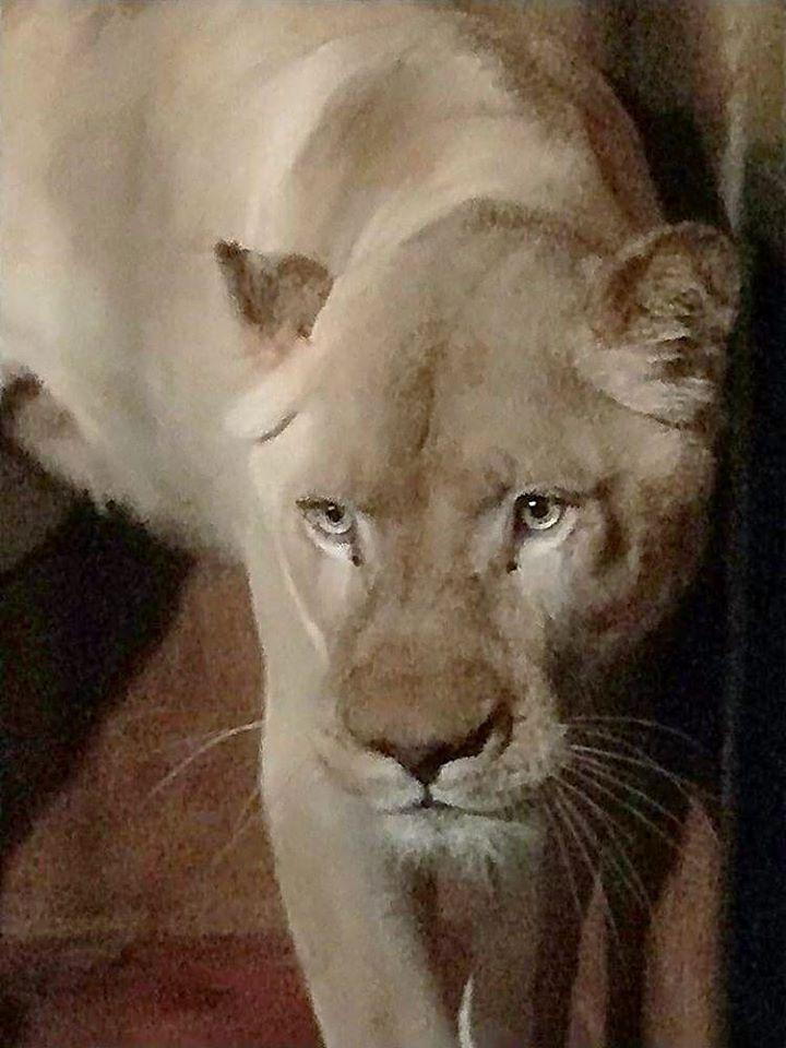 Белата лавицата Бела е новата жителка на скопската зоолошка