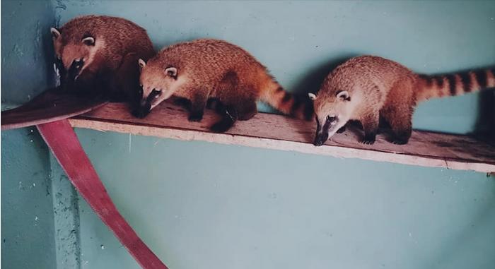 Нови животни во скопската Зоолошка градина