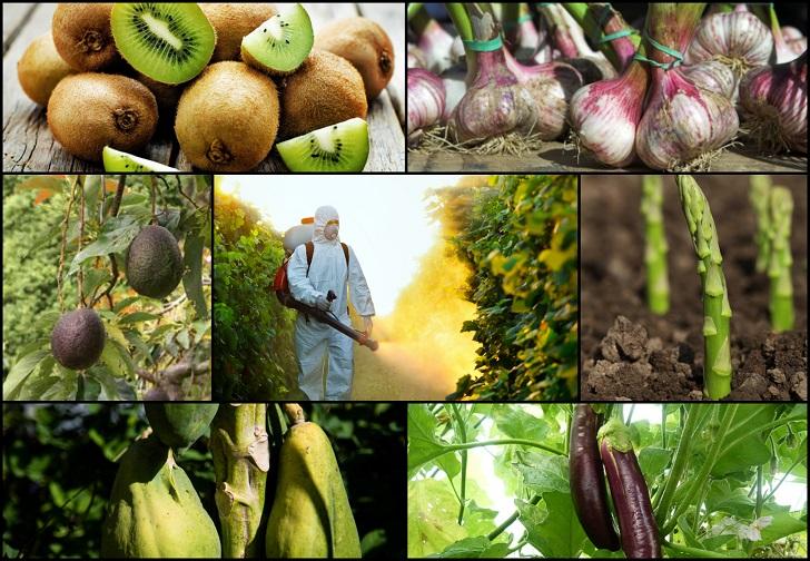 Европските земји забранија увоз на овошје третирано со пестицидот хлорпирифос